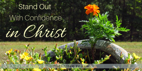 Confidence in Christ one flower stands different from others